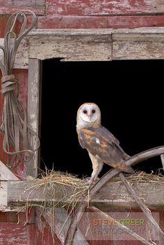 Barn Owl, New Jersey, by Steve Greer Photography | Photoshelter