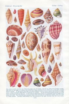 Vintage Sea Shells print.