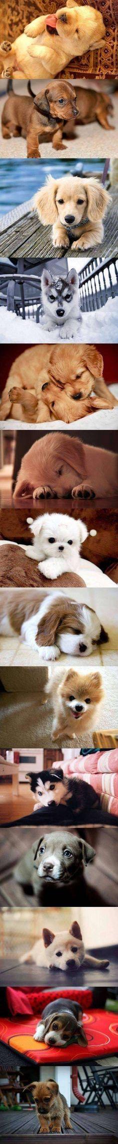 Cute Puppies*