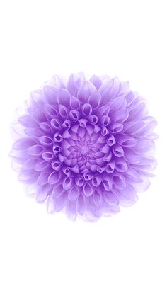 Abstract Purple Blossom #iPhone #5s #Wallpaper