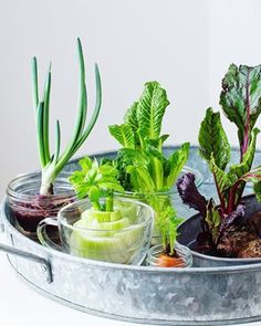 How to Regrow Vegetable Scraps - Simple Bites Turn your compost into a windowsill edible garden. Regrow Vegetables, Chicken And Vegetables, Veg Garden, Edible Garden, Apartment Vegetable Garden, Growing Veggies, Growing Plants, Ginger Chicken, Sustainable Food