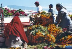 Unloading bales of marigolds during the Day of the Dead preparations in Oaxaca, Mexico. Photo by Phil Saviano