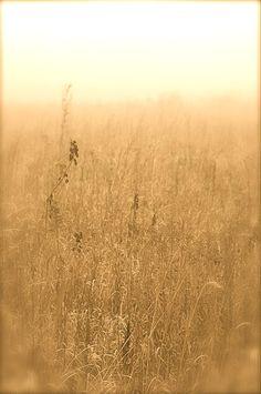 Foggy Prairie Dawn // Photograph by Tim Good