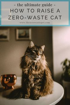 Cat lovers, this one's for you! Everything you need to know about loving and caring for cats while being gentle on the planet, the people in your home, and--bonus!--your wallet, too! Video Chat, Pet Dogs, Pets, Mama Cat, Photo Chat, Love Your Pet, Eco Friendly House, Zero Waste, Pet Care