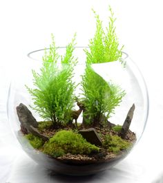 Woodland terrarium- are those tiny cypress trees?!