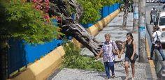 Árvore cai por cima de grade do Parque 13 de Maio Quem passou por uma das calçadas que rodeiam o Parque 13 de Maio, na área central do Recife, no começo da tarde desta quarta-feira (5), tomou um susto. Uma árvore de grande porte caiu por cima de uma das grades do parque e complicou a passagem dos pedestres.   A assessoria de imprensa da Emlurb (Empresa de Manutenção e Limpeza Urbana) informou que o órgão  enviou uma equipe de técn Publicado em 05.06.2013, às 15h44 (Leia [+] clicando na…
