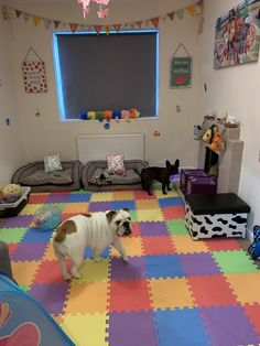 Theyre Impressed With Their New Playroom! on Amazing Playroom Ideas 1171 Dog Play Room, Puppy Room, Dog Rooms, Cat Room, Dog Room Design, Dog Room Decor, Dog Bedroom, Pet Hotel, Dog Area