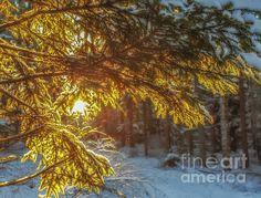 January light