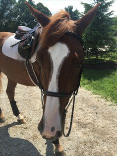 this was the first horse I had ever owned I this mares name is Callie my cousin loved horses so I gave her Callie I miss her but my cousin loves her and I get to ride her sometimes-Kevin