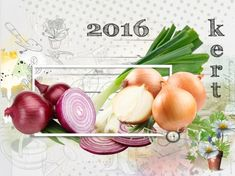 Hagymák - vöröshagyma, dughagyma - gazigazito.hu Herb Garden, Onion, Herbs, Vegetables, Lilac, Onions, Herbs Garden, Herb, Vegetable Recipes