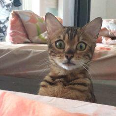 「見てしまったにゃ!」大変なものを目撃して固まる猫さん。オドオドしながら可愛い行動に出た ( *´艸`)♡ | エウレカ!eureka! - もふもふ犬猫動画