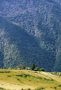 Field and hillside - Kuenga Rabten, Tongsa - Bhutan