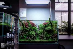 Nano Aquarium, Nature Aquarium, Planted Aquarium, Aquarium Fish, Takashi Amano, Paludarium, Fish Ponds, Dragon Art, Fish Tank
