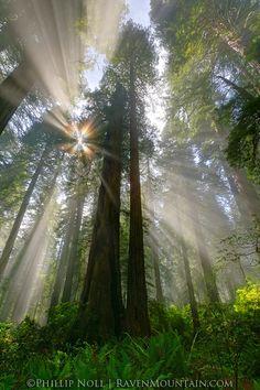 Redwoods State Park, California.