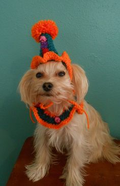 Crocheted Clown Hat and Neck Ruffle for Dogs or Cats by Fancihorse