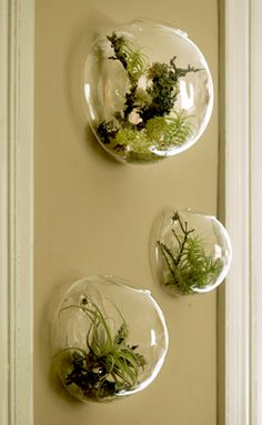 These lovely and simple glass bubble vases are perfect for any room in the house.  Use them for cut flowers or plant clippings or as a terrarium.  Create a living headboard by hanging 6 of them across a queen size bed.