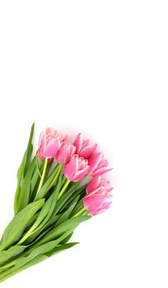 Tulip Wallpaper 3.jpg - Box