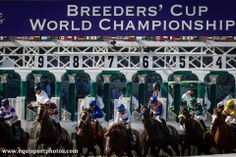 The Breeders' Cup board voted today to maintain its race day medication policies for the 2013 Breeders' Cup World Championships which were in place for the 2012 event. This year, horses competing in the races restricted to Juveniles will not be permitted Lasix (furosemide). Horses participating in all other Breeders' Cup races will be permitted to race on Lasix, which will be administered only by veterinarians authorized by the California Horse Racing Board (CHRB) and approved by Breeders'…