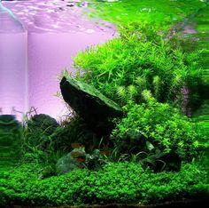 dennerle more aquascaping paludariums aquascaping aquarium aquascaping ...
