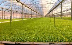 Invernaderos de cultivo de la Región de Murcia