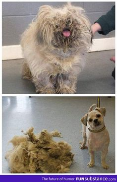 Extreme makeover: Dog edition