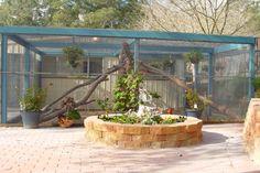 another large cat enclosure Farm Projects, Animal Projects, Cat Habitat, Cat Pen, Outdoor Cat Enclosure, Cat Towers, Animal Room, Cat Room, Cat Condo