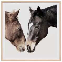 The TWO Horses Framed Print in is part of freedom's range of contemporary furniture and homewares and is available to shop now. Two Horses, Loft Style, All Wall, Contemporary Furniture, Two By Two, Wall Decor, Framed Prints, Colours, Freedom