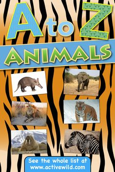 An a to z list of animals with pictures and facts for kids and adults. From aardvark to zebra - complete animal A-Z list - discover amazing animals today! Animal Facts For Kids, List Of Animals, How To Find Out, Awesome, Pictures, Free, Photos, Resim, Clip Art
