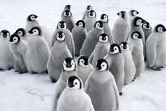 Gathering: This large crowd huddle close together, hoping to stay warm in each others' company