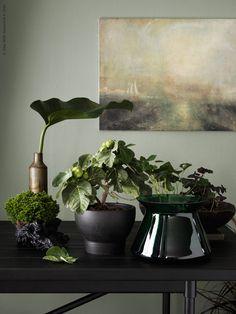 Sommarens grönska övergår nu i mossigare gröna och jordiga toner. I höst väljer vi gärna storbladiga krukväxter och låter dem smälta ihop till en frodig silhuett mot den grågröna väggen.