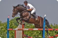 On my wishlist the beautiful Trakehner