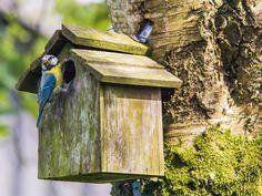 Ein Garten Fur Vogel Und Nutzlinge In 2020 Garten Vogel Im Garten Nistkasten