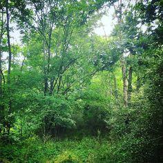 the overgrown path that leads to convergence my new #installationart piece at my #Georgia studio. link to video is in my bio #behindthescenes #inthestudio #artiststudio #landart #earthart #environmentalart #nature #conceptual #experimental #art #artist #GAartist #NYCartist #bdstudios #green