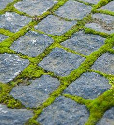 Patios de adoquines Adoquines Ideas, Path Ideas, Paving Ideas, Moss Garden, Garden Paths, Garden Landscaping, Garden Paving, Patio Pavé, Backyard Pavers
