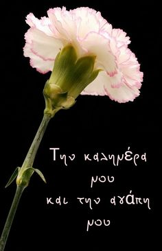 Love Kiss, Good Morning, Dandelion, Plants, Greek, Wallpapers, Humor, Ideas, Buen Dia