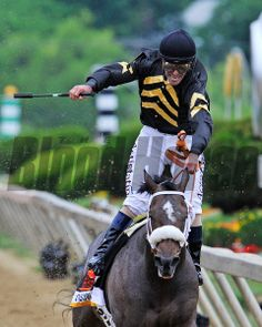 Gary Stevens celebrates winning the 138th Preakness on Oxbow... © 2013 Rick Samuels/The Blood-Horse