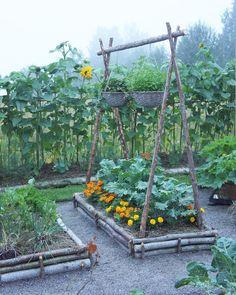 Idag har jag hämtat senvuxen gran hos min Pettsson-far. Backyard Vegetable Gardens, Potager Garden, Veg Garden, Vegetable Garden Design, Growing Gardens, Farm Gardens, Outdoor Gardens, Dream Garden, Garden Planning