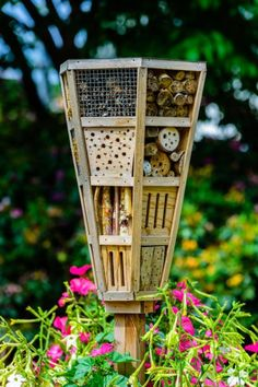 Creating Bug Gardens: Attracting Beneficial Insects For A Garden -  Gardeners have lots of good reasons to try to lure beneficial insects for a garden. But how to do it? Calling them or whistling softly rarely works. You'll want to use insect friendly garden plants to start creating bug gardens. This article will help get you started.