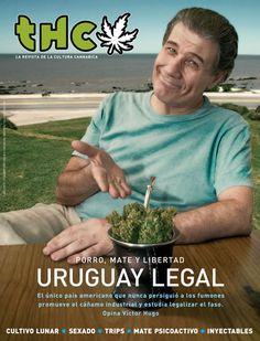 En Uruguay analizan proyecto común para el autocultivo de la marihuana !!
