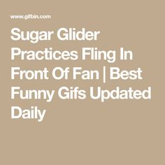 Sugar Glider Practices Fling In Front Of Fan   Best Funny Gifs Updated Daily