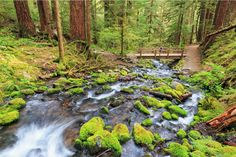 7. Olympic National Park, Washington | 15 National Parks That Should Be On Your Bucket List