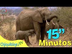 Animales Salvajes Para Niños | Con Sonidos + Palabras 1-7 años (BITs Lectura) - YouTube