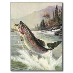 Vintage Rainbow Trout Fish Fisherman Fishing Postcard