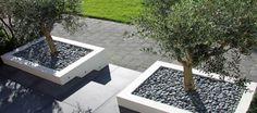 in raised planter Small Space Gardening, Garden Spaces, Landscape Design, Garden Design, Patio Design, Garden Solutions, Raised Planter, House Yard, Modern Planters
