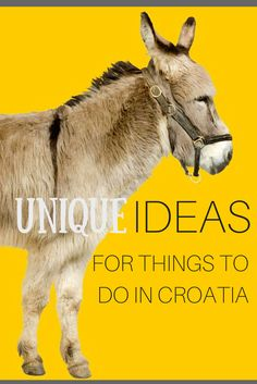 What if we told you there are six very unique things to do in Croatia that you've never done?