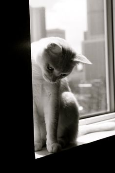microwalrus:    belle*tumblr - caturday:Darla….