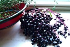Elderberry Extract | Homemade Recipes For Cold And Flu