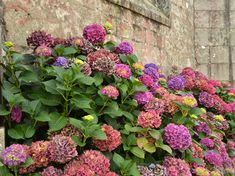 Free Image on Pixabay - Wall, Hydrangea, Plant, Pink, Flora Free Pictures, Free Images, Hydrangea, Rose, Floral Wreath, Bloom, Wreaths, Landscape, Garden