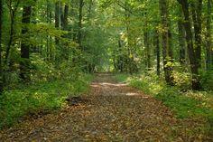 Gerade gefunden auf http://long-leg-photography-shop.fineartprint.de  Lanschaft, Natur, Wald, Weg, Waldweg, Laub, Herbst, Jahreszeiten