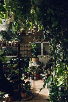 Amazing Indoor Jungle Decorations Tips and Ideas 14 Plantas Indoor, Jungle Decorations, Christmas Decorations, Jungle House, Jungle Room, Indoor Vegetable Gardening, Organic Gardening, Deco Nature, Plant Aesthetic